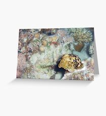 Baby Cuttlefish and Hard Coral Greeting Card