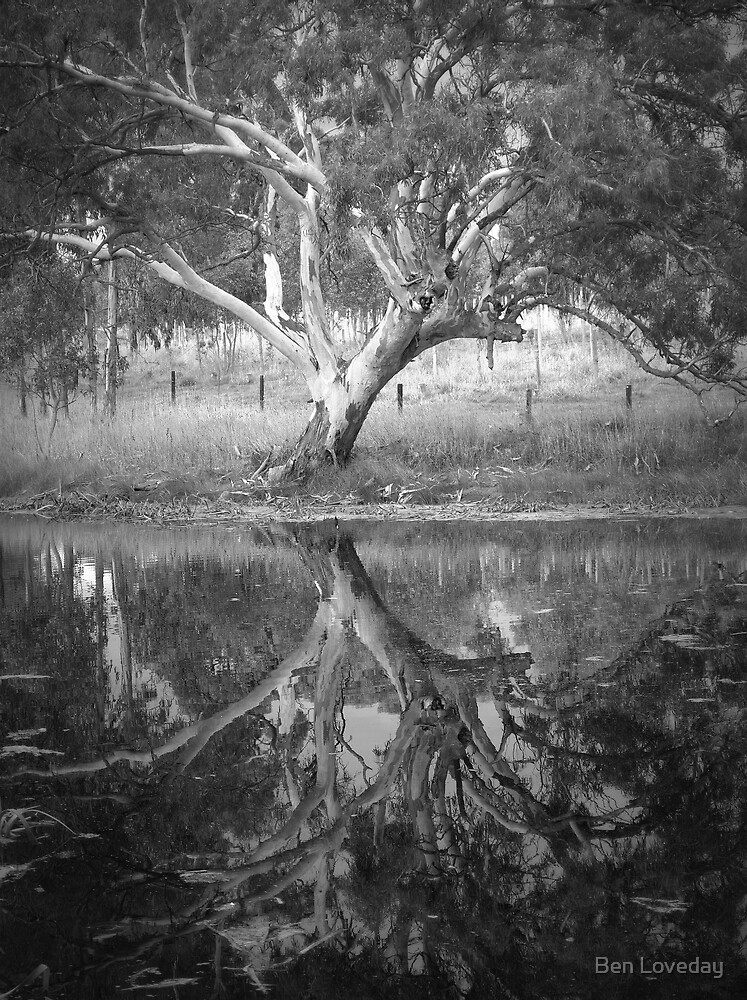 Quot Scary Tree Reflection In A Pond Harrogate Quot By Ben