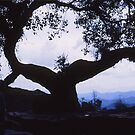 Old tree in Nepal by Marlies Odehnal