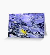 School of Bigeye and Yellowtail Snapper Greeting Card