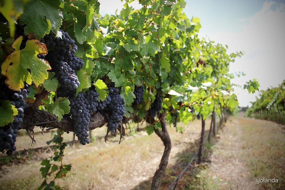 Vintage Vines v.2 by yolanda