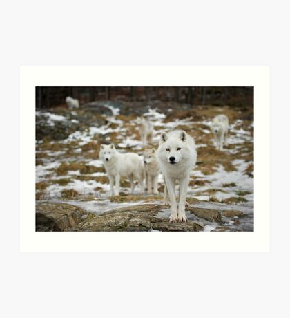 The Pack Art Print