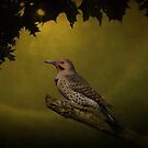 Northern Flicker by swaby