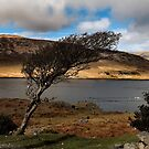 windswept tree.. by Michelle McMahon