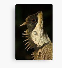 Mountain Horned Dragon, Acanthosaura crucigera, Khao Sok National Park, Thailand Canvas Print