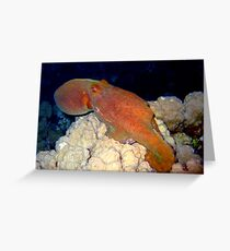 Octopus at Night Greeting Card