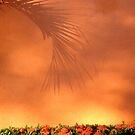 Orange shadow by richard  webb