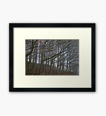 The sleeping trees of Winter Framed Print