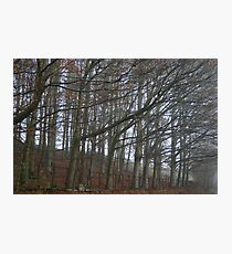 The sleeping trees of Winter Photographic Print
