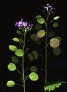Money Plant by Barbara Wyeth