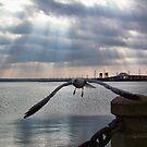Gull In Flight by BonnieToll
