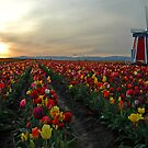 My Touch Of Holland by Nick Boren