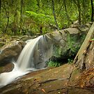 Autumn Afternoon at Olinda Falls by Jason Green