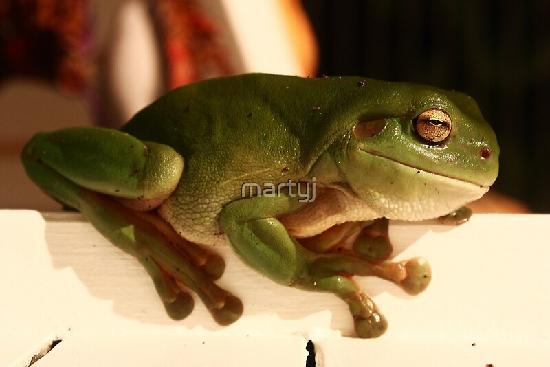 Quot Worlds Biggest Frog Quot By Martyj Redbubble