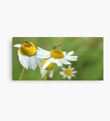 Insect Zoo Canvas Print