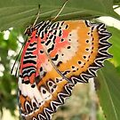 Lacewing Butterfly by Michaela1991