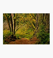 Ancient Entry Photographic Print