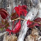 Autumn - first leaves turning by kenspics