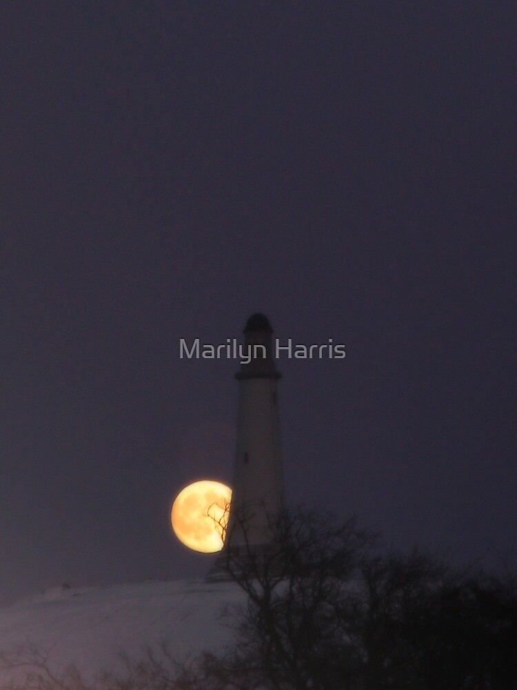The Hoad and the Moon by Marilyn Harris