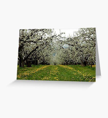 Hood River Blossom Landscape Greeting Card