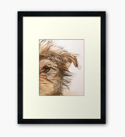 Dooley Framed Print