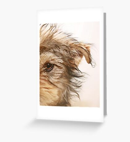 Dooley Greeting Card