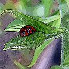 Lady Bug by Janice Dunbar