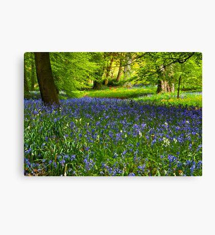A Carpet of Bluebells Canvas Print