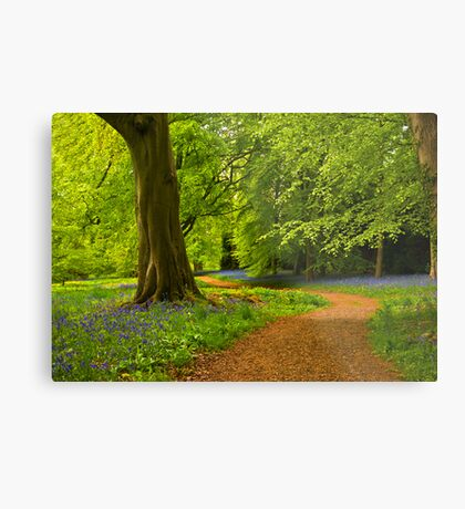 Woodland Path Metal Print
