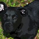 Black Pup by Ginger  Barritt