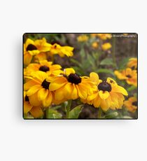Bright Flowers attracting the wasps Metal Print