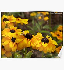 Bright Flowers attracting the wasps Poster