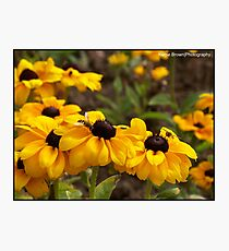 Bright Flowers attracting the wasps Photographic Print