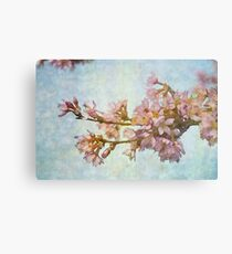 Soft Cherry Canvas Print