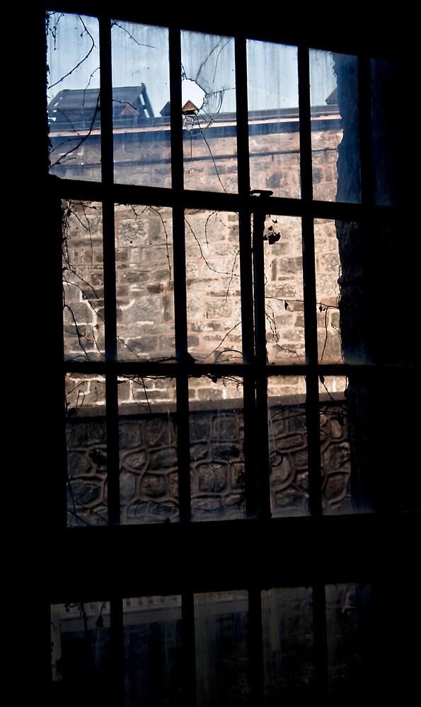 Window Pane - Philadelphia, PA by Lindsey Butler