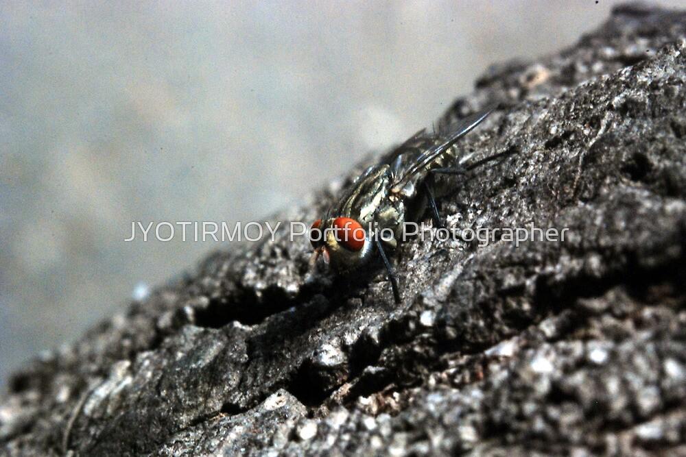 FLY by JYOTIRMOY Portfolio Photographer