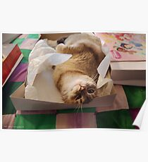 Packaged Pussycat Poster