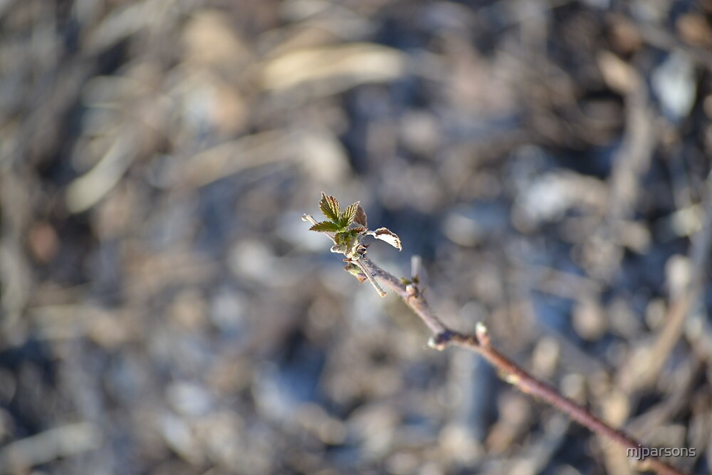 Raspberry Greenery in Spring by mjparsons