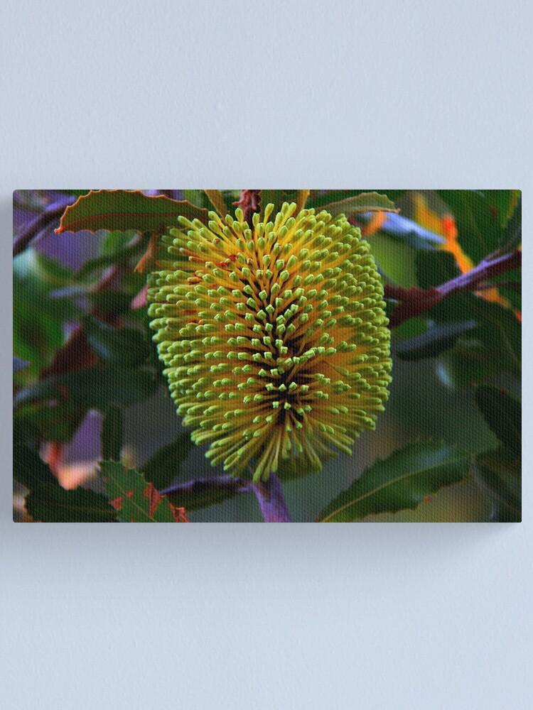 Alternate view of Banksia lemanniana Canvas Print