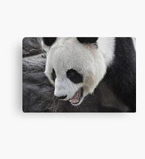 Panda Mania!!! Canvas Print