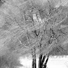 Tree in B&W by PPPhotoArt
