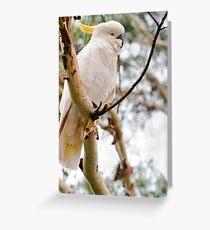 Cocky Greeting Card