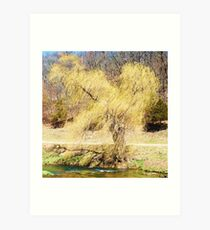 """ Windy Willow "" Art Print"
