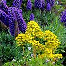 In A Spring Garden by Asoka