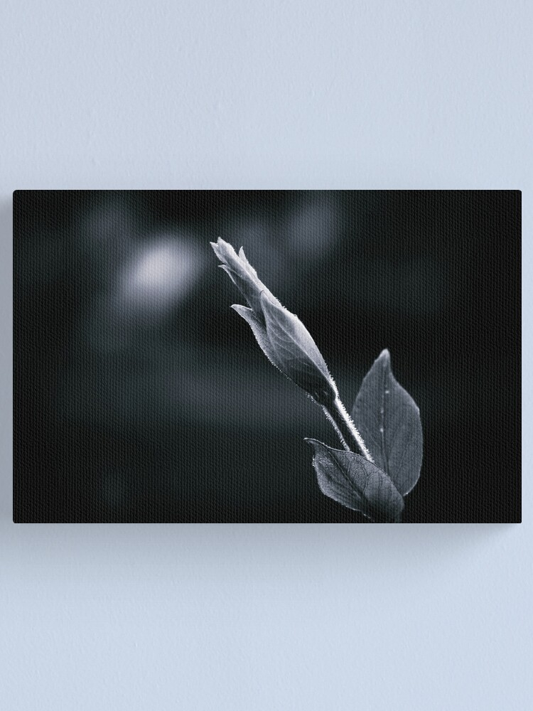 Alternate view of Looking For the Light in a World of Darkness Canvas Print