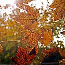 Sunroof~Leaves by Terri~Lynn Bealle