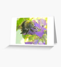 A feasting Bee. Greeting Card