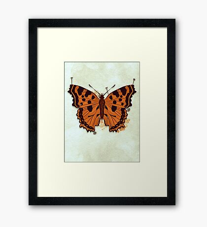 Butterfly: Pinned down Framed Print