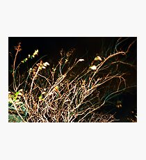 blur Photographic Print