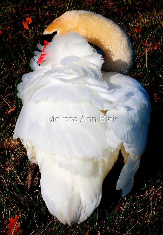 Shy by Melissa Ann Blair